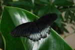 farfalla posata sul fiore,farfalla vola in fattoria didattica,farfalla per bambini in fattoria,educazione ambientale farfalla