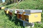 arnia in fattoria didattica,alveare casetta delle api in fattoria didattica,educazione ambientale sulle api in fattoria didattica