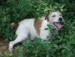 cane della fattoria didattica,percorso didattico per bambini sulla cura e addestramento del cane