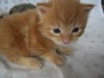 gattino in fattoria didattica,gatto della fattoria per bambini,percorso didattico sul gatto in fattoria didattica
