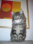 micio della fattoria,piccolo gattino della fattoria didattica,gatto che miagola in fattoria didattica per bambini