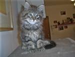 gatta con piccoli gattini miagolano in fattoria didattica,percorso didattico sulla cura del gatto in fattoria