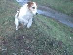 cane da ferma e da caccia in fattoria,cane a caccia di piccoli animali in fattoria didattica,cane da compagnia della fattoria