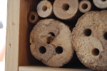 ape solitaria mentre entra nel buco della casetta per insetti,laboratorio didattico sulle api solitarie o osmie costruiamo una casetta per insetti