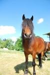 cavallo in una fattoria didattica,percorso didattico coi cavalli in fattoria per bambini,cavallo con lunga criniera in fattoria didattica