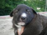 cucciolo di cane in fattoria didattica,percorso didattico sul cane in fattoria didattica per bambini