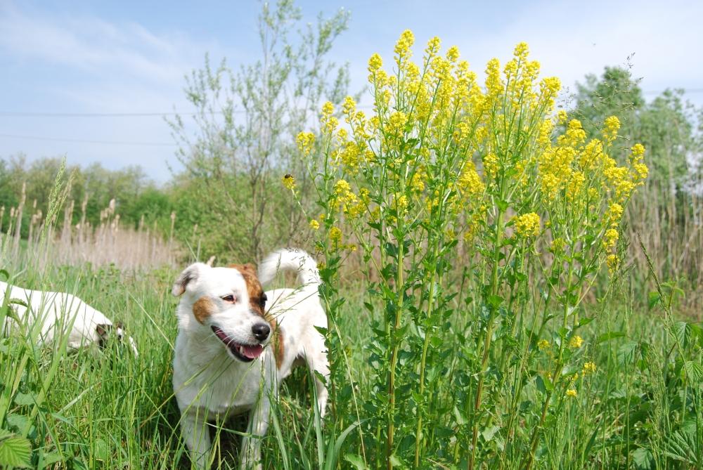IL CANE il cagnolino cuccioli