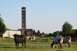 mucche al pascolo,vacche libere al pascolo della fattoria,mucche sul prato ruminano e riposano