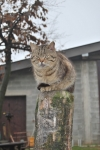 gatto della fattoria didattica a varese,fattoria didattica con gattino in provincia di varese