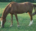 foto di animali della fattoria,fattorie didattiche:cavallo-il cavallo bruca l'erba,puledro-cavalla.Latte fresco appena muntodidattica per bambini in fattoria,disegni da colorare per bambini di animali in fattoria didattica,