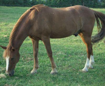 Foto di animali della fattoria fattorie didattiche cavallo for Fattoria immagini da colorare