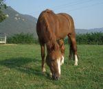 foto di animali della fattoria.fattorie didattiche:cavallo-puledro-cavalla-il cavallo corre molto veloce.Compriamo il latte fresco appena munto dai distributori di latte