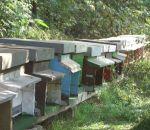 foto animali della fattoria,fattorie didattiche:ape-nelle arnie vivono le api che producono del buon miele Italiano.Anche il latte fresco appena munto è Italiano,didattica per bambini in fattoria,disegni da colorare per bambini di animali in fattoria dida