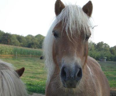 Foto di animali della fattoria fattorie didattiche cavallo - Pony da colorare in immagini ...