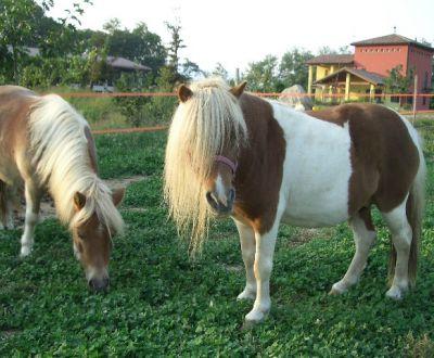 Immagini di Cavalli puledri stalloni in fattori