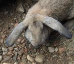 foto animali della fattoria.fattorie didattiche:coniglio-il coniglio ha delle orecchie lunghissime.Latte fresco appena munto latte Italiano,didattica per bambini in fattoria,disegni da colorare per bambini di animali in fattoria didattica