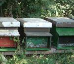 foto animali della fattoria-fattorie didattiche-:ape-le api sono insetti utilissimi all'agricoltura e producono del buon miele,pappa reale,polline,cera.Latte fresco appena munto nelle fattorie didattiche