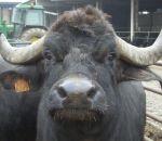 foto animali della fattoriafattoria didatticaann
