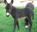 foto animali della fattoriafattorie didatticheas