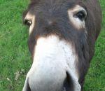 foto animali della fattoria-fattorie didattiche:asini-tutti gli animali sono molto curiosi,come il cavallo,l'asino,la mucca,la capra,la pecora e l'agnello.Latte fresco appena munto