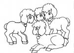 disegni animali della fattoria da colorare:agnello-gli agnelli sono i piccoli della pecora,pecora,agnello,latte,agriturismo,animali fattoria,distributori latte crudo,disegno da colorare pecora,foto animali nella fattoria,fattorie didattiche,latte..latte..