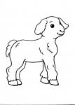 disegni animali della fattoria da colorare:agnello-pecora,gli agnelli appena nascono bevono del buon latte nutriente da mamma pecora,disegno pecora da colorare..agnello da colorare..disegno agnellino da colorare
