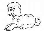 disegni animali della fattoria da colorare:agnello-pecora ,l'agnello ha una folta lana che lo protegge dal freddo..disegno pecorella da colorare..disegno pecora da colorare..agnello