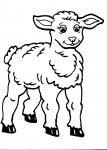 disegni agnello della fattoria da colorare:agnello-pecora,l'agnello beve tanto latte da mamma pecora..disegno pecora da colorare..disegno agnellino da colorare..agnello da colorare