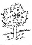 disegni animali della fattoria da colorare:albero con frutti-le piante oltre a produrre ossigeno ci forniscono tanti frutti che troveremo  sulle nostre tavole,agriturismi in provincia di varese,prodotti tipici varesini,disegno pianta da colorare