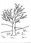 disegni animali da colorare:albero-gli alberi sono importanti per la vita sulla terra perchè producono ossigeno,agriturismi in provincia di varese,prodotti tipici varesini,disegno albero con frutta da colorare