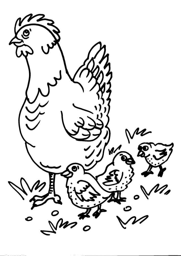 Disegni gallina della fattoria gallina gallo pulcino la for Fattoria immagini da colorare