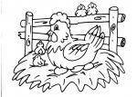 disegni animali da colorare:gallo-gallina-pollo-pulcino:i pulcini nascono dalle uova perchè sono uccelli,disegno gallo da colorare..disegno gallina da colorare..pulcino da colorare..chioccia da colorare