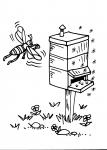 disegno ape da colorare:alveare,arnia,ape-le api sono tra gli insetti più importanti per l'uomo,senza le api non avremmo frutti,agriturismi in provincia di varese,prodotti tipici varese,disegno api nell'alveare da colorare