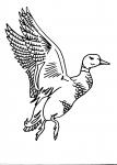 disegni animali da colorare:anatra,germano reale-disegno da colorare di germano reale...compleanno in fattoria..,agriturismi in provincia di varese,prodotti tipici varesini,disegno paperella da colorare per bambini
