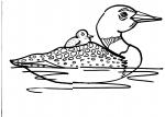 disegni animali da colorare:anatra,anatroccolo-disegno anatroccolo da colorare..disegno anatra da colorare..in fattoria didattica..,agriturismi in provincia di varese,prodotti tipici varesini,disegno papera da colorare,fattoria animali,fattorie didattiche
