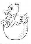 disegni animali della fattoria da colorare:anatroccolo,uovo-dopo che mamma anatra ha covato le uova nascerà un piccolo anatroccolo,agriturismi in provincia di varese,prodotti tipici varese,disegno animali da corte da colorare fattoria animali,fattorie did
