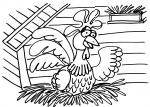 disegni animali della fattoria  da colorare:gallina,gallo,pollastra,pulcino-disegno pulcino da colorare in fattoria didattica..disegno gallo nel pollaio da colorare...disegno pulcino con uovo da colorare..disegno pollo da colorare..pollastra da colorare