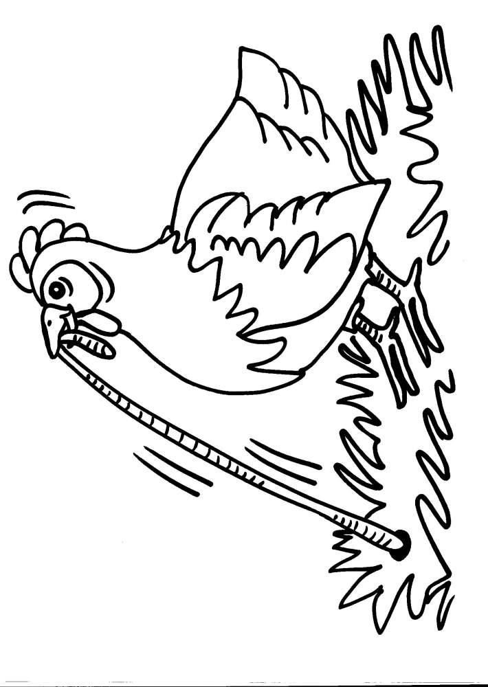 Disegni Animali Da Colorare Gallina Pulcino Disegno Da Colorare