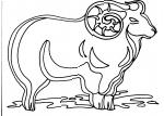 disegno montone della fattoria da colorare:ariete-pecora,disegno da colorare di ariete in fattoria didattica.., agriturismo..disegno ariete da colorare..disegno pecora da colorare in fattoria