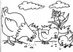 disegni animali della fattoria da colorare:gallo,gallina,pulcini-disegno pulcino da colorare in fattoria...disegno galline e galli da colorare..disegno uovo con pulcino da colorare..disegno faraona da colorare