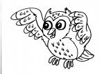 disegni animali da colorare:civetta-rapace notturno,civetta,barbagianni,gufo,allocco sono rapaci notturni..disegno gufetto da colorare..disegno gufo reale da colorare..disegno civetta da colorare