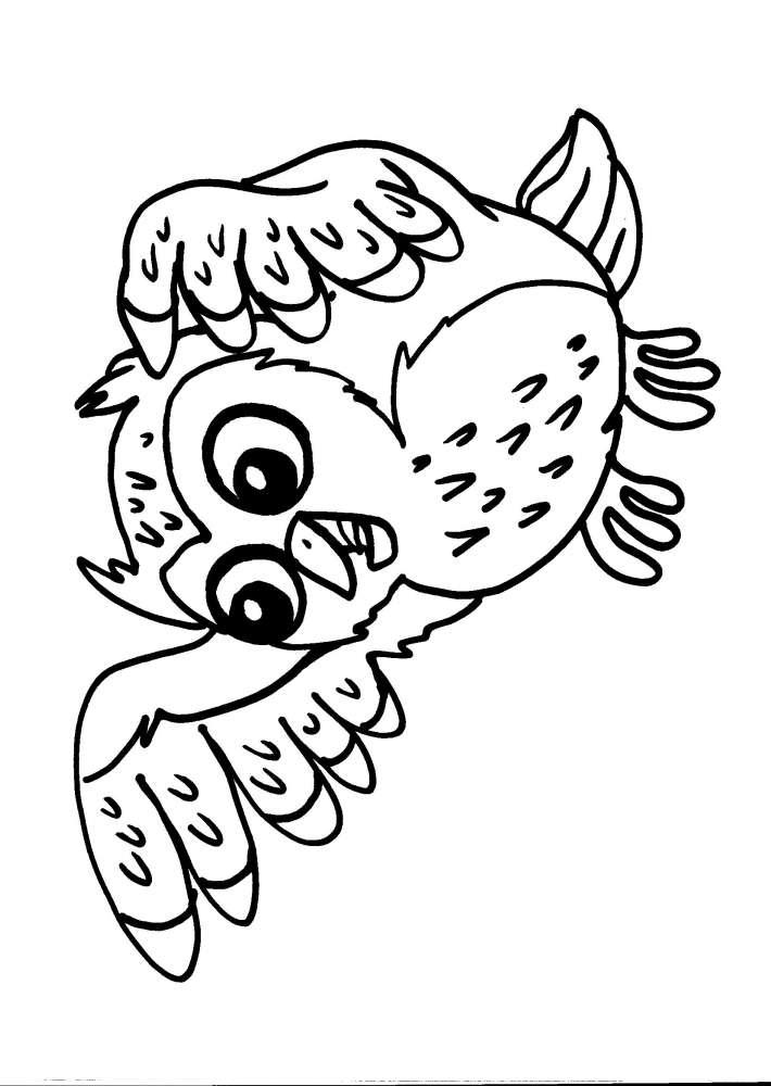 disegni da colorare dei gufi