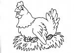 disegni animali da colorare:gallina,uova,disegno pulcino da colorare..disegno gallina in fattoria didattica.. disegno gallina che cova le uova da colorare..lotta tra galli galletti da colorare..disegno tacchino da colorare