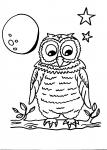 disegni animali da colorare:civetta,disegno civetta da colorare..disegno barbagianni da colorare..disegno rapace nella notte da colorare...disegno uccello notturno da colorare..disegno gufo da colorare