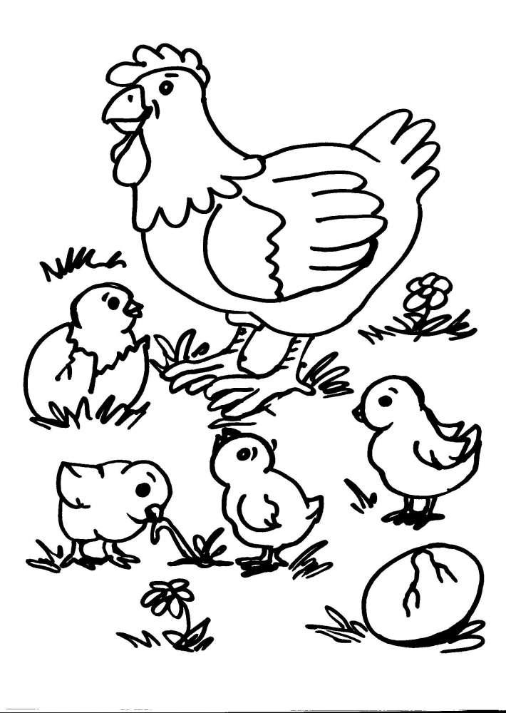Disegni Animali Da Coloraregallinagallopulcinodisegno Pulcino