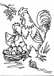 disegni animali della fattoria da colorare:gallo,gallina,pulcino..disegno pulcino da colorare..nidiata di uccelli da colorare..pollaio con galli e galline da colorare..uova da covare da colorare