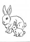 disegno coniglio in fattoria da colorare:coniglia..disegno da colorare coniglio in fattoria didattica..disegno leprotto da colorare...disegno lepre da colorare..disegno coniglio lunghe orecchie da colorare...