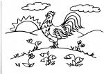 disegni animali della fattoria da colorare:gallo,gallina..disegno gallo da colorare in fattoria didattica..disegno piccoli pulcini da colorare..disegno galline e galli da colorare...disegno pollo da colorare