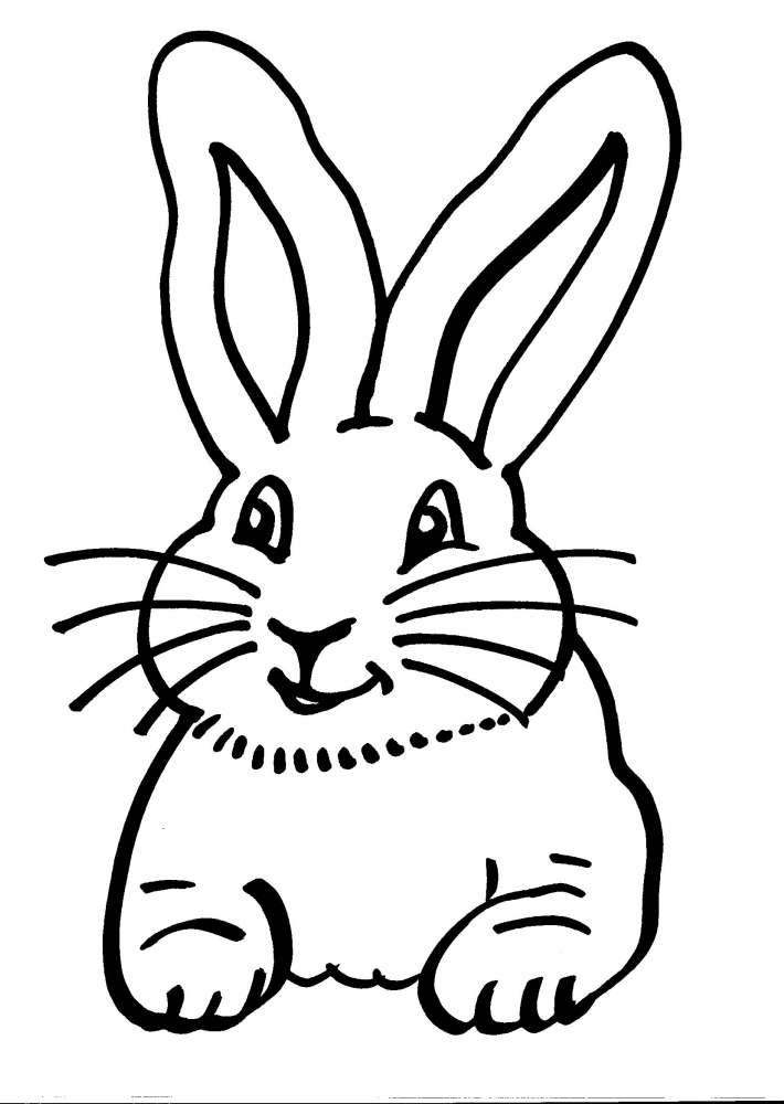 Disegni Animali In Fattoria Da Colorare Coniglietto Coniglio