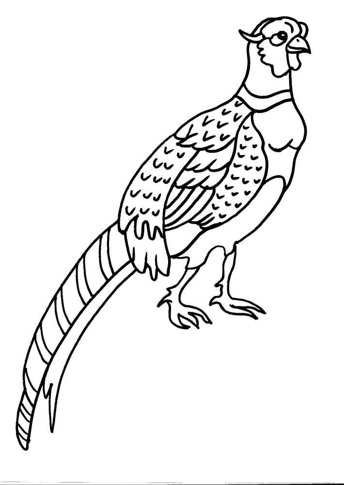 Disegno Cinghiale Da Colorare Disegno Uccello Da Colorare